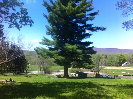 Green hills of the Berkshires
