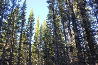 Looking up on the way to Brainard Lake, Boulder