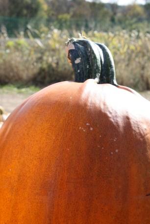 Pumpkin patch | Where Erin Goes