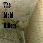 How To Prevent Black Mold