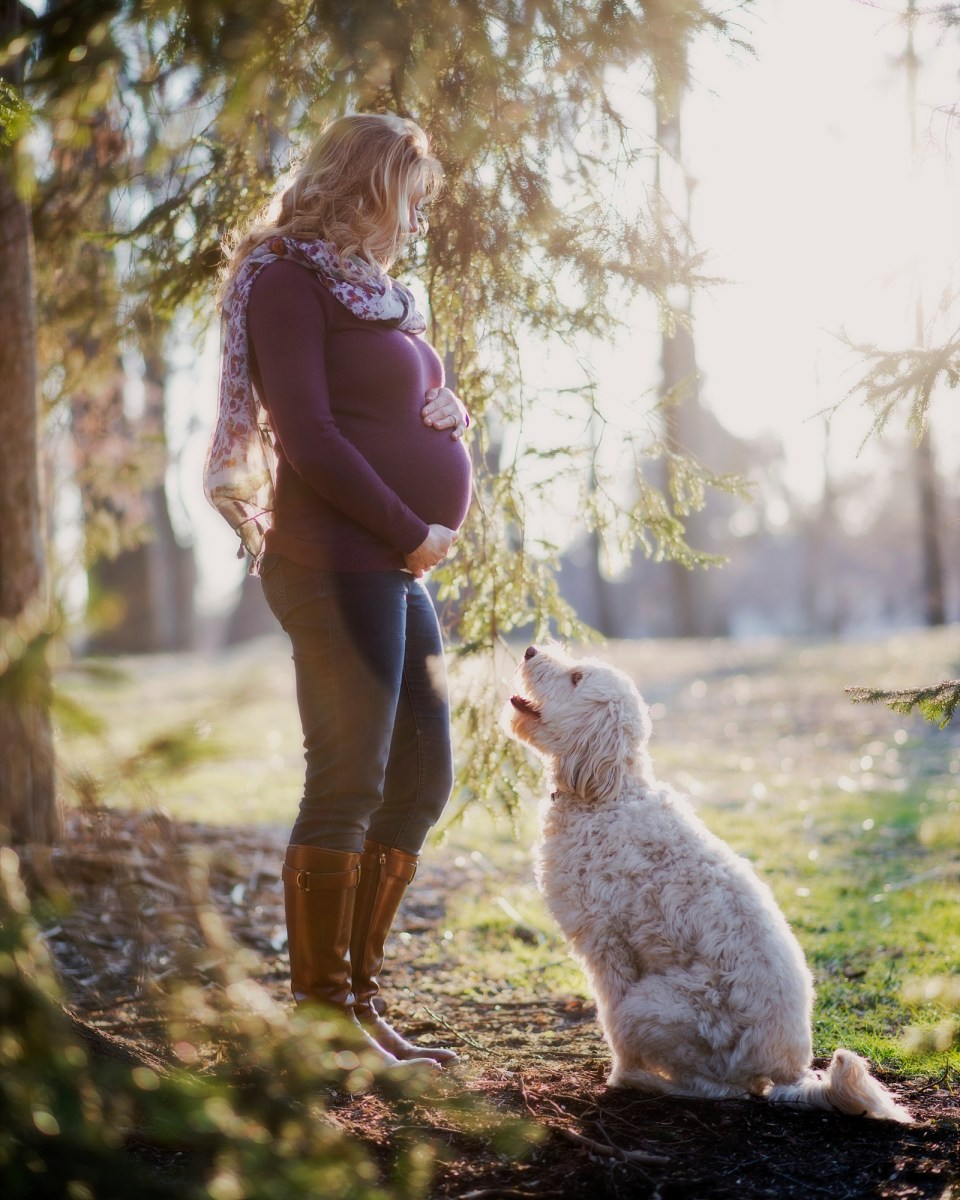 Maternity Portraits with dog at Cherry Hill Park in Falls Church, VA