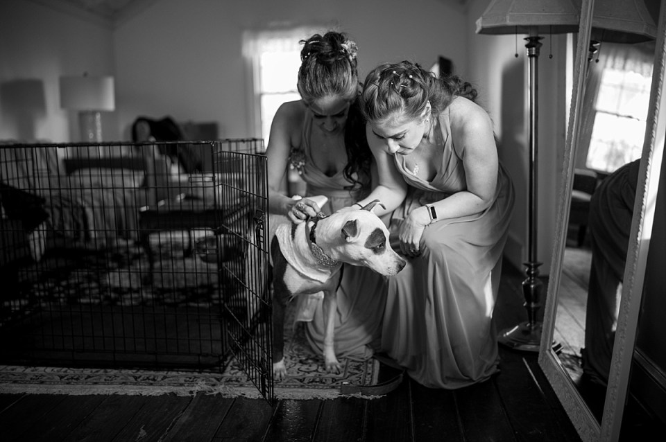 Wedding Venues in Virginia that allow dogs