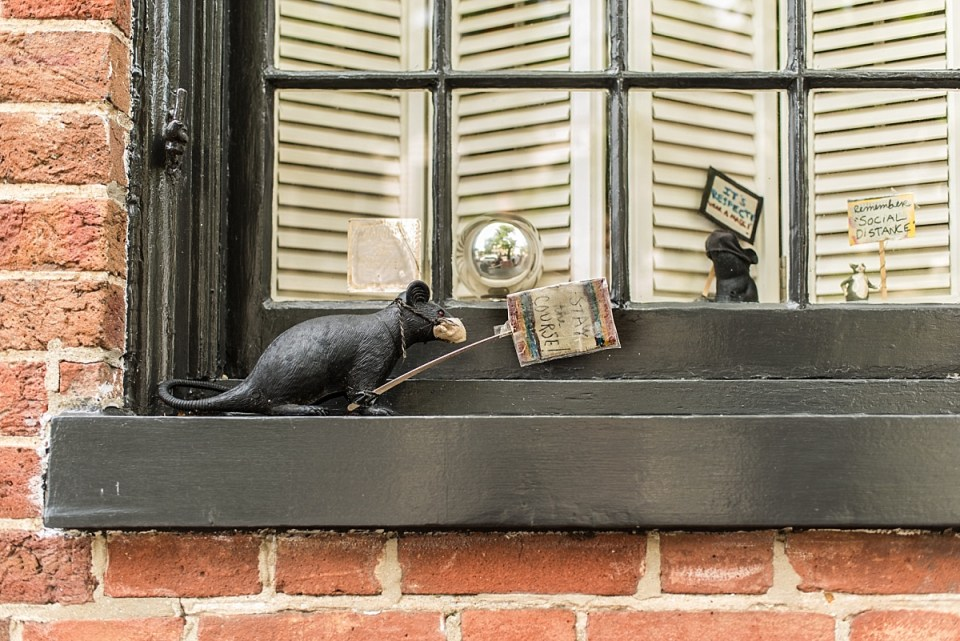Rats with Signs in a Window in Old Town Alexandria