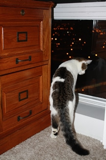 Cat and File Cabinet
