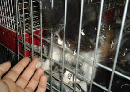 gato encerrado 2
