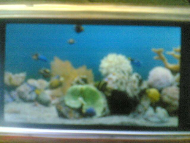 marine aquarium mini by erit07