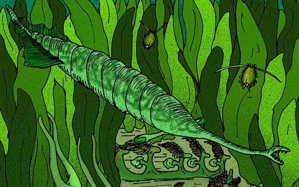 El monstruo de Tully, Tullimonstrum gregarium