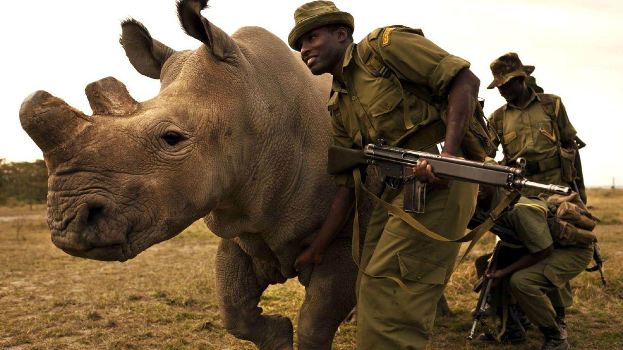 En India persiguen y matan a cazadores de rinocerontes