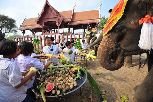 Elefantes degustando fruta en su día