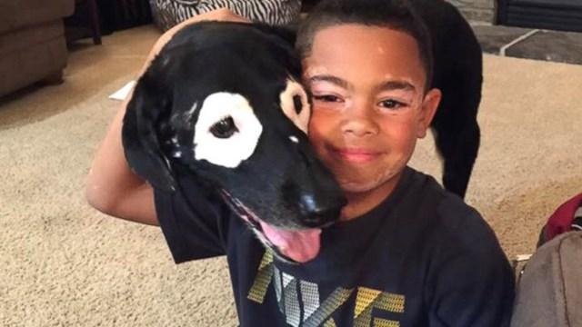Niño con vitíligo vence su depresión al conocer a un perro con su misma condición