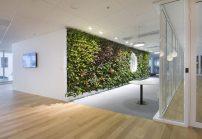 En las oficinas Skanska, Meristem Desing logró colocar 35 plantas por metro cuadrado