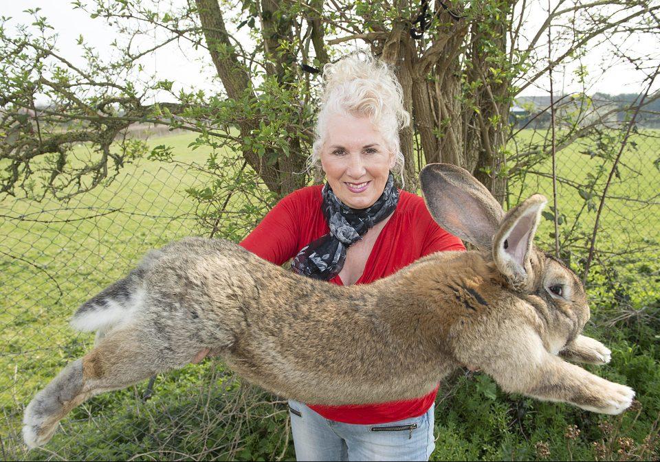 Annette Edwards, criadora de conejos, con Darius, el conejo más grande del mundo