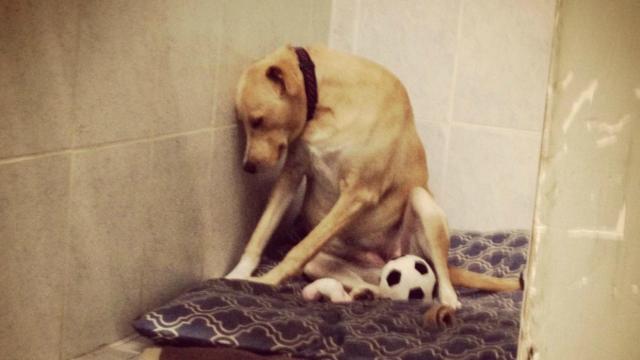 La perrita más triste del mundo se queda sin familia por tercera vez