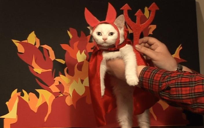 El gato Satanás