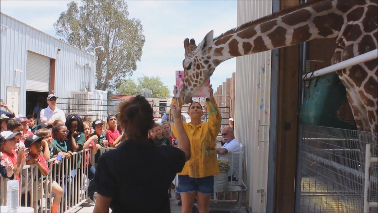 Conoce a Ozzie, la jirafa artista que pinta cuadros abstractos