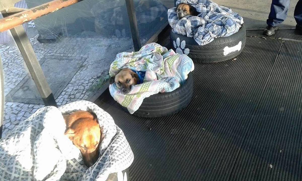 Empleados de una estación de autobuses en Brasil ayudan de manera ingeniosa a perros de la calle