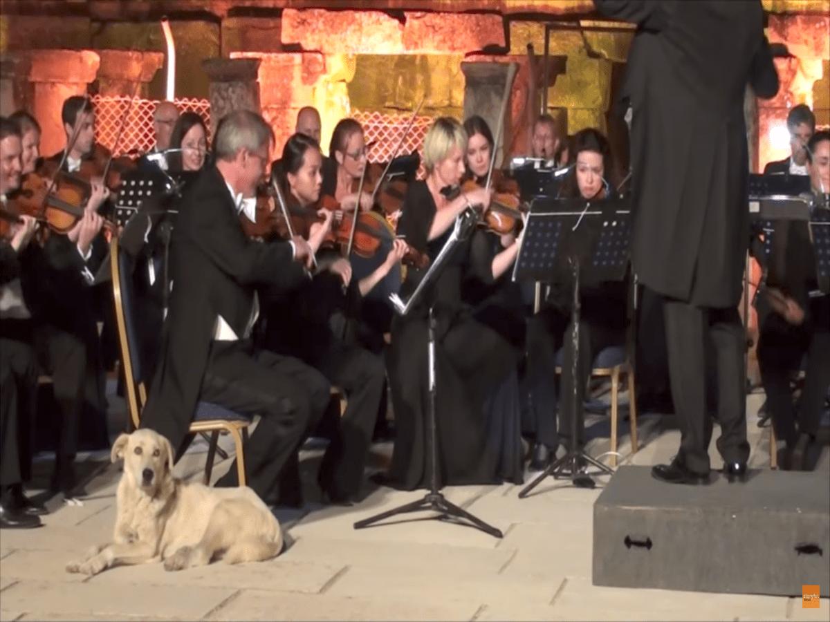 El perrito más culto que verás esta semana estaba en Turquía