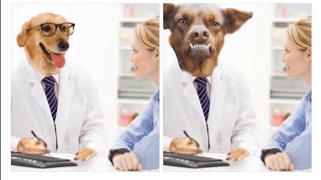 mejores memes doctor perro
