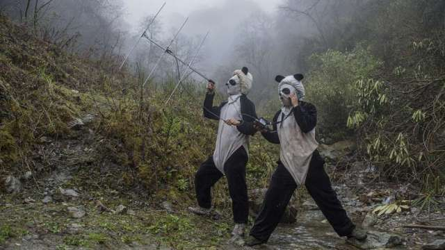 World Press Photo 2017 pandas