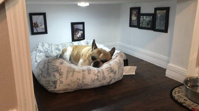 Hennessy, el perro, tiene su propia habitación