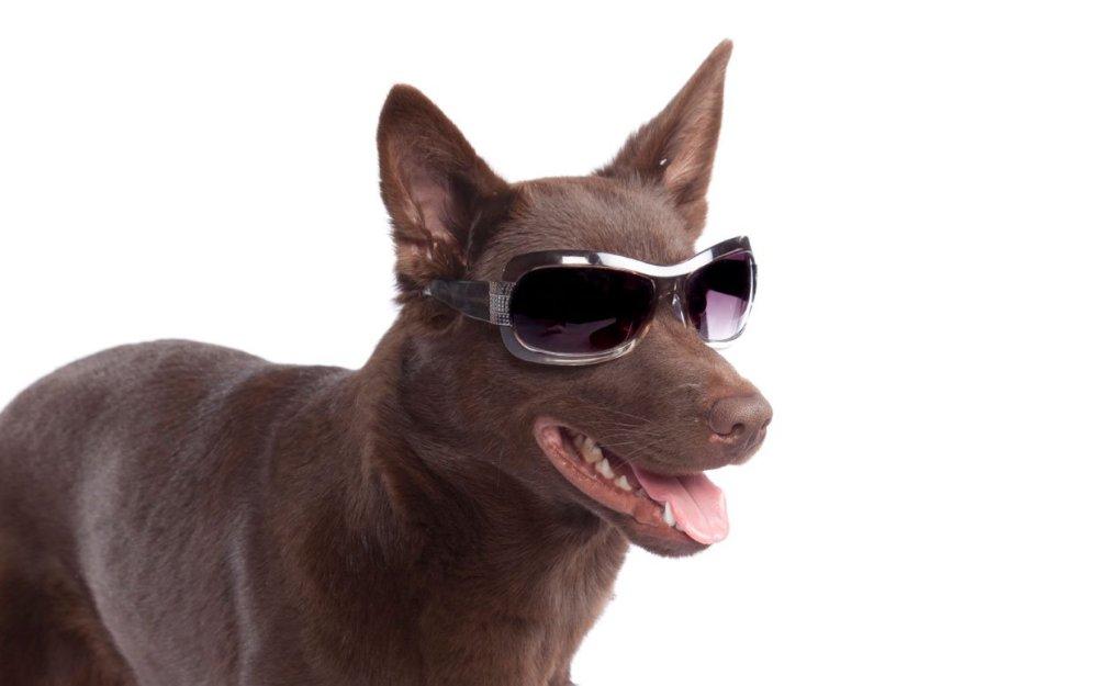 Las mascotas pueden ser afectadas por el eclipse solar