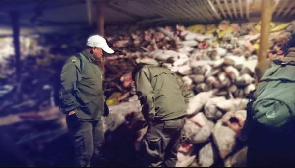 Pescadores chinos fueron atrapados por pescar tiburones en Ecuador