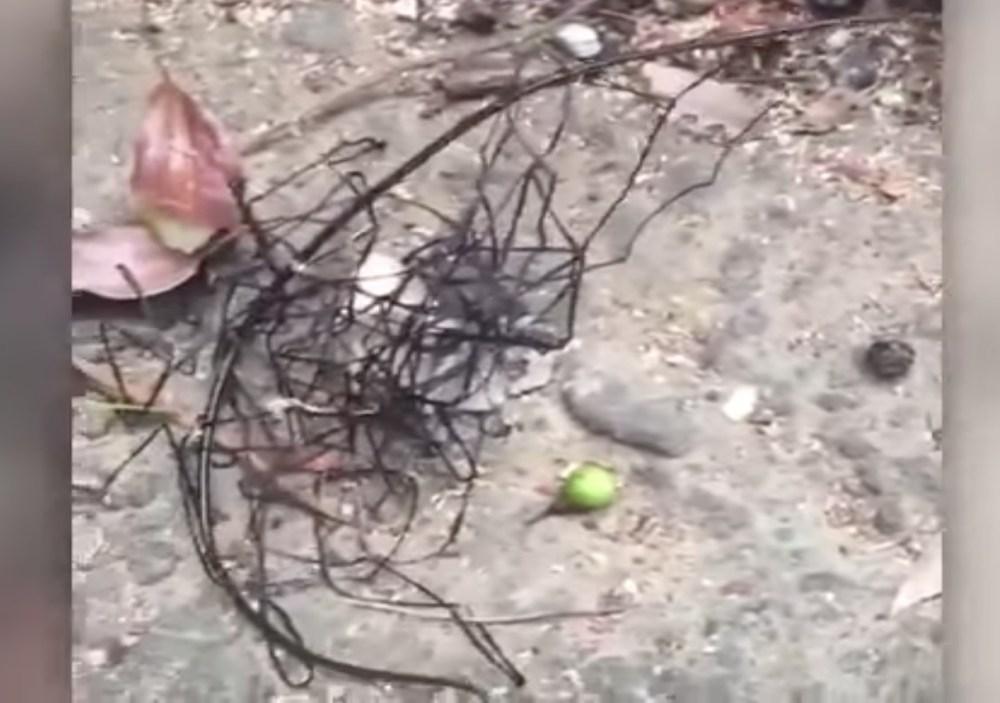 Extraterrestre, Insectos, Gusanos, Bicho, Taiwán, Extraño