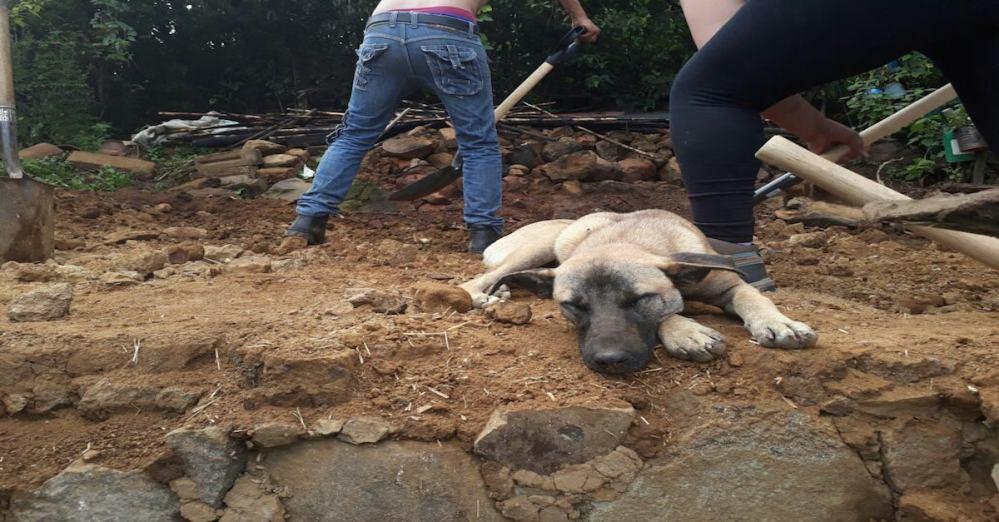 Jacinto perro que espera a dueño fallecido en el sismo