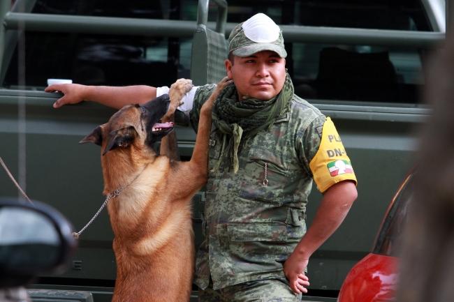 Perro de rescate con su compañero