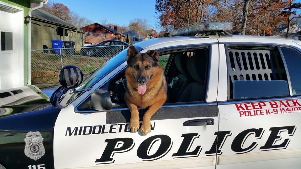 Hunter, perro K-9 de la Policía de Connecticut