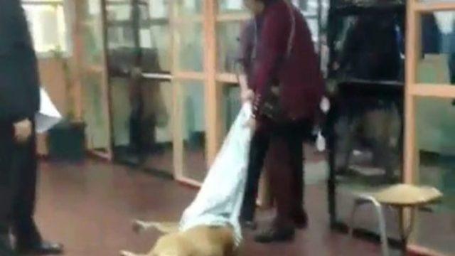 Denuncian maltrato a perrito en escuela de Chile