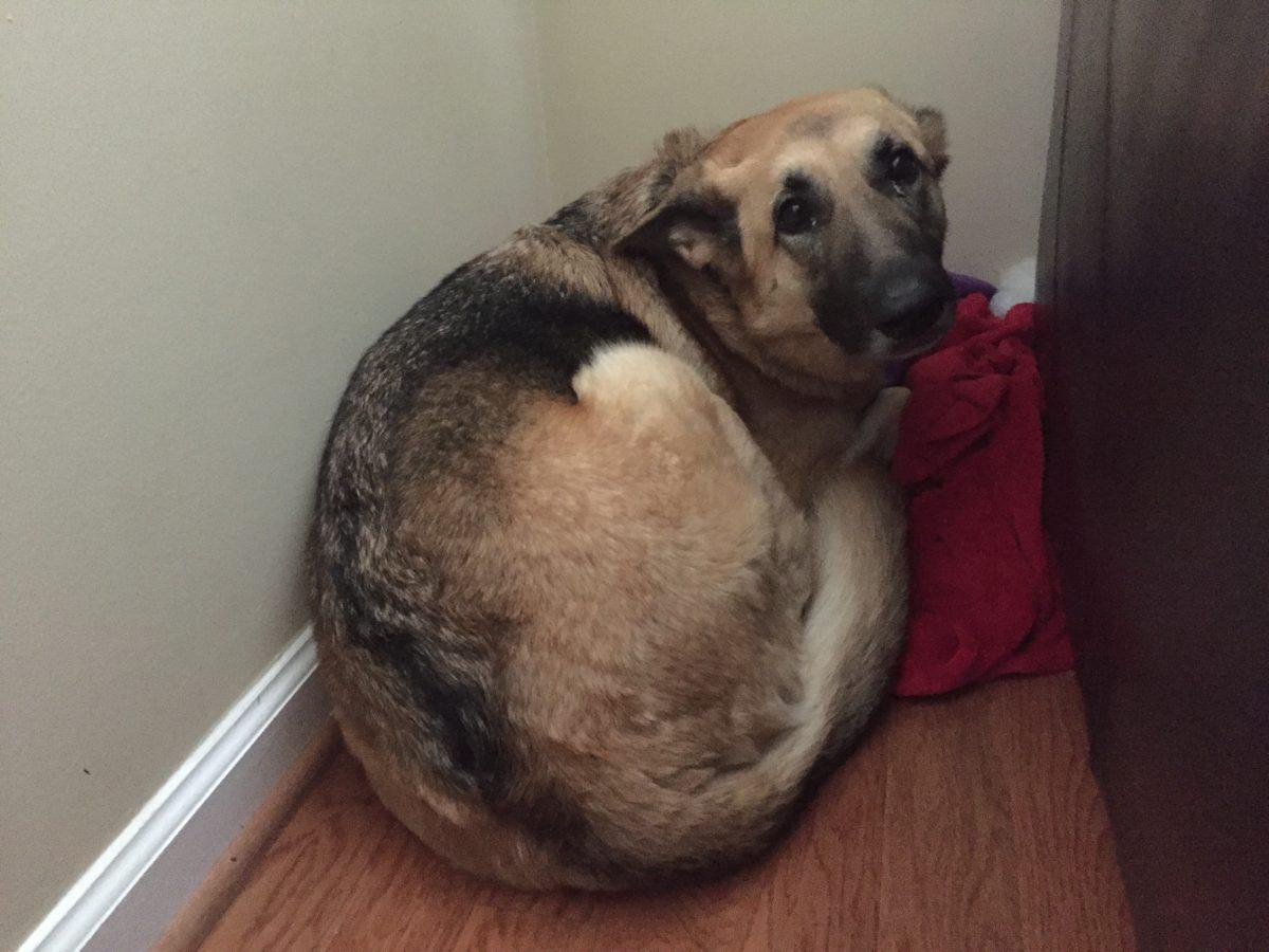 Perro asustado oculto detrás de un mueble en una esquina