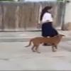 Perro desfila en marcha del 16 de septiembre