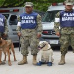 Conoce a los héroes peludos ayudan damnificados sismo
