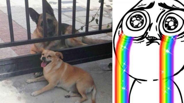 Perros que se quieren