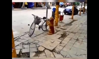 Perro obediente cuida la bicicleta de su dueño