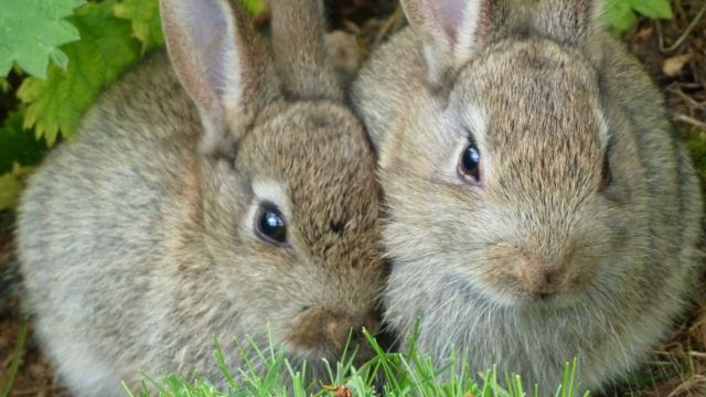 El país que urge a sus ciudadanos reproducirse como conejos