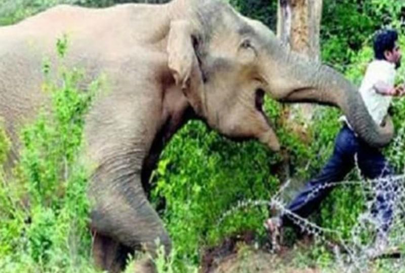 Elefante mata a hombre que quiso una selfie con él