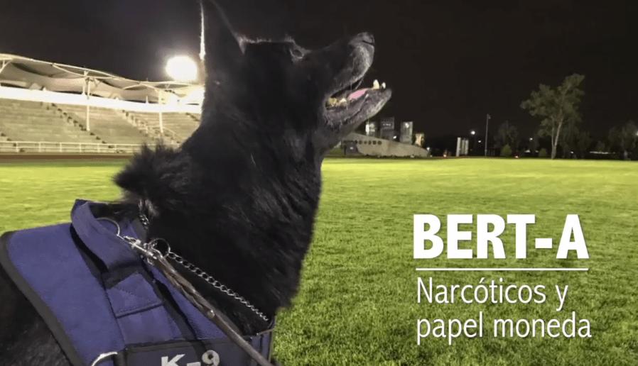 Perros policías en adopción