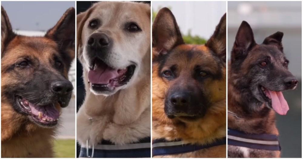 Perros de la Policía Federal de México jubilados en adopción