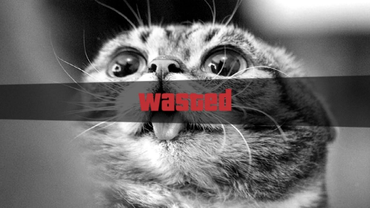 Gatos, Internet, Videos, Graciosos, Chistosos, Locos