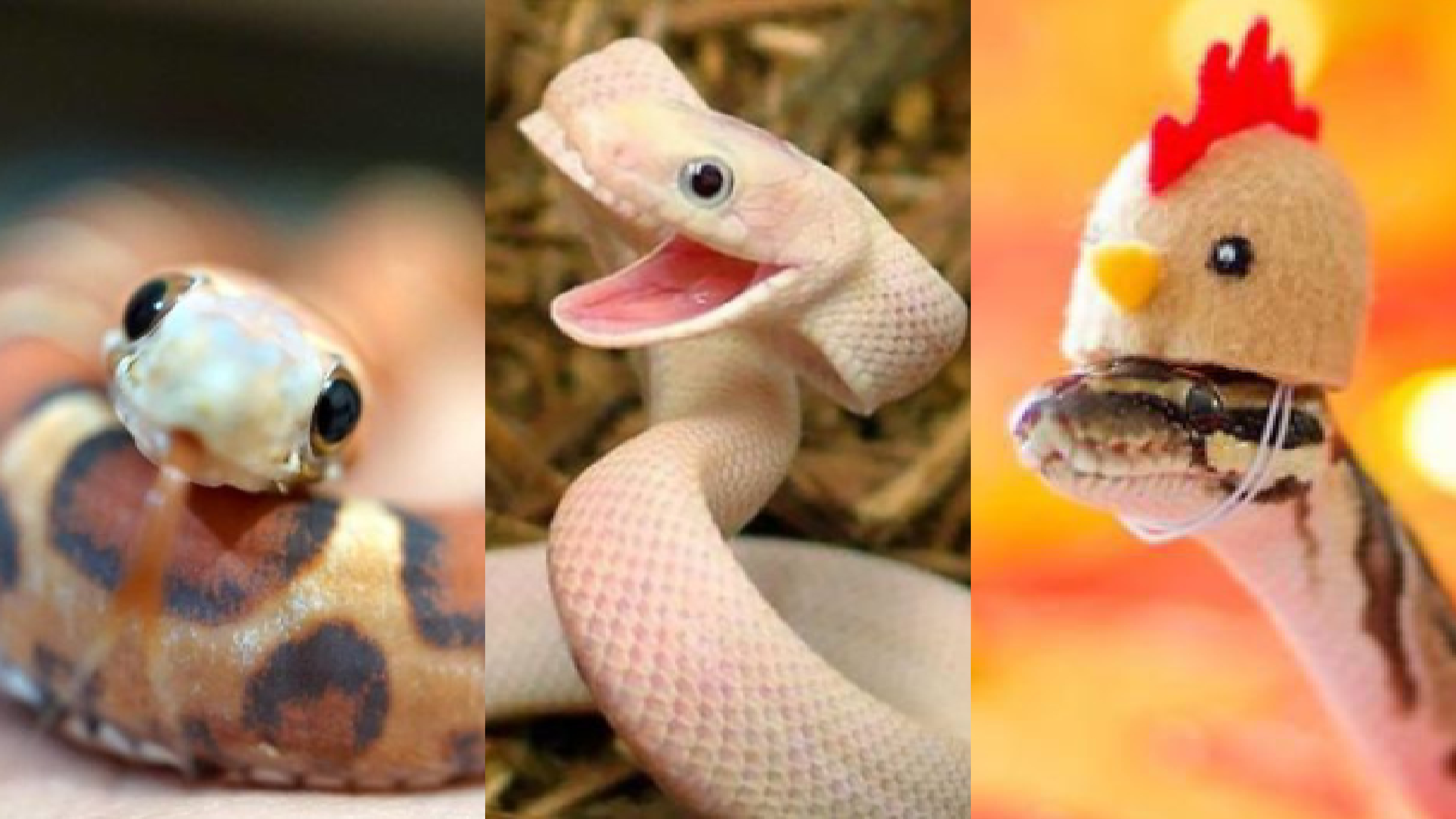 Fotos, Serpientes, Víboras, Lindas, Tiernas, Miedo