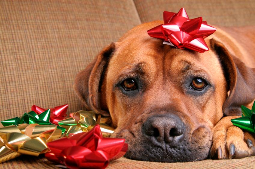 Perro triste en Navidad