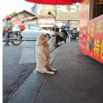 Perrito come diario gratis y nadie le niega comida
