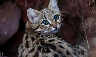 gato-patas-manchadas-negras-tierno-martal-mortifero