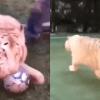 Tigre Blanco futbolista pelota video Rusia 2018 Mundial