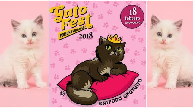 Gato Fest 2018