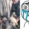 Esta perra adoptó y salvó a un changuito y ahora son inseparables