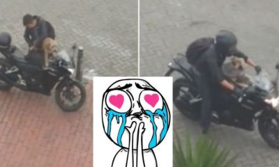 perrito-motociclista
