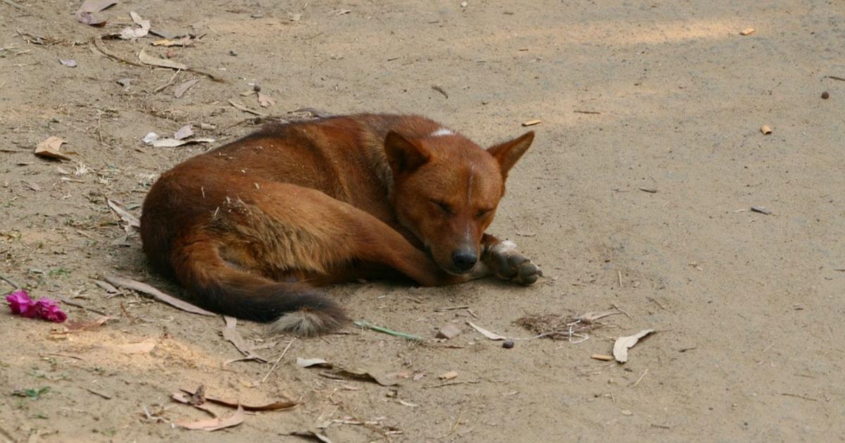 perro-murio-luego-de-10-anos-de-velar-tumba-de-su-dueno